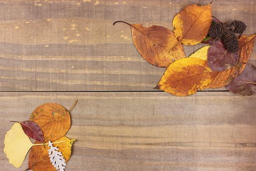 木の葉 枯葉 枯れ葉 落ち葉 落葉 植物 葉 葉っぱ 植物 秋 ナチュラル 自然 葉脈 木 木材 板 アンティーク レトロ テクスチャ 背景 壁紙