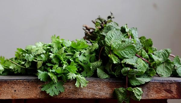 家庭菜園 菜園 植物 屋内 緑 室内 ガーデニング 園芸 栽培 苗 植木 鉢 プランター 葉 葉っぱ 葉物 ツルムラサキ つるむらさき 栄養 食べ物 野菜 健康 趣味 葉物野菜 食材