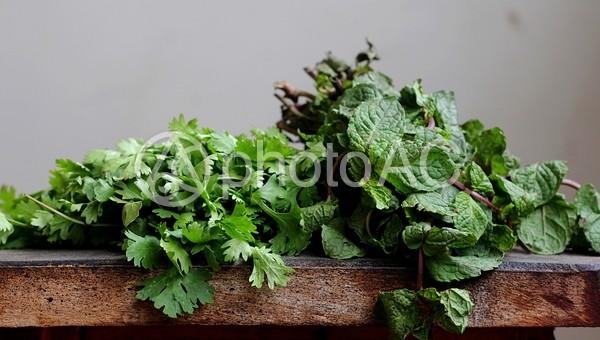 家庭菜園の写真