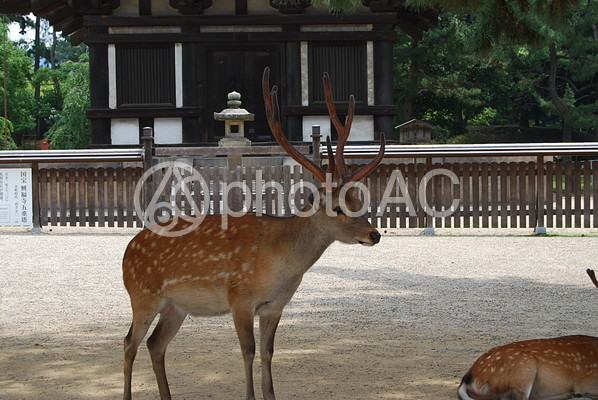 奈良神社仏閣25の写真