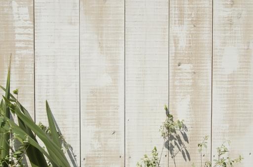 板壁 木製 壁 かべ カベ 植物 素材 ウッド 木 葉 葉っぱ 緑 グリーン テキストスペース 文字スペース 背景 背景素材 コピースペース diy カフェ レストラン ショップ バック バックグラウンド テクスチャ