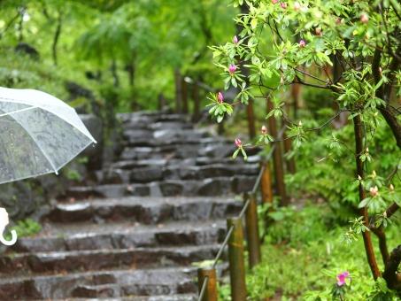 雨 梅雨 傘 階段 公園 緑 木 石段 新緑 つぼみ 蕾 静 雨音 散歩 物思い 風景 自然 背景 散歩 雫 雨垂れ ピンク 約束 思い出 記憶 想い出 午後