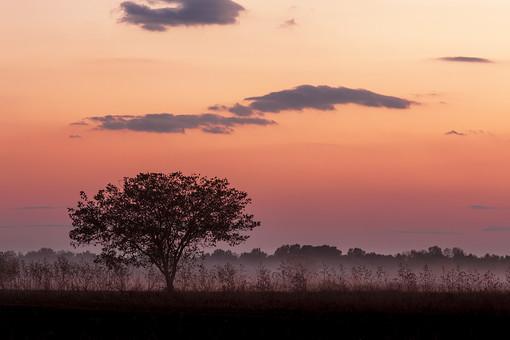 静か 風景 大自然 自然 環境 問題 エコ 活動 リーフ 木々 樹木 草 茂る セルビア 緑 グリーン 晴れ 奥行き 喉か 平和 夕方 夕日 夕焼け 小焼け ロマンチック 一本の木 立木 植物