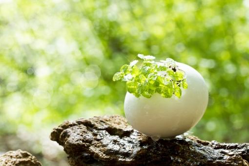 卵 タマゴの殻 木 緑 樹木 自然 風景 小物 芽吹き 新芽 発芽 希望 生命 再生 誕生 グリーン 観葉植物 癒し 輝き 光 木漏れ日 ミント キラキラ 未来 ハーブ たまご 森 林 爽やか 朝 春 初夏 エコ 環境 eco イメージ 背景