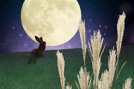 月見の夜とススキの写真