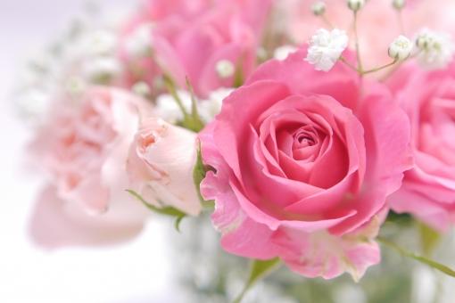 かすみ草 アレンジ フラワーアレンジメント メッセージカード 祝福 記念日 ホワイトデー 愛らしい 優しい 温かい 柔かい ピンク 秋 ブーケ 贈り物 エステ 結婚 結婚式 グリーティングカード コピースペース 5月 薔薇 ばら ギフト 背景 壁紙 母の日 父の日 植物 初夏 5月 6月 五月 六月 おめでとう 誕生日 プレゼント メッセージ カード 花束 フラワーアレンジ お祝い 花 バラ 行事 春 リラックス リラクゼーション くつろぎ くつろぐ やわらかい ソフト 白バック 白背景 バックグラウンド 背景素材 素材 マクロ アップ クローズアップ 明るい 華やか 美しい きれい 綺麗 かわいい 可愛い 癒し 美容 健康 アロマ イメージ 幸せ 幸福 恋 愛 恋愛 2月 バレンタイン バレンタインデー