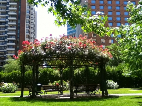 東屋 あずまや 公園 ベンチ 晴れ マンション 木陰 緑 植物 木 花 外国 海外 庭 中庭