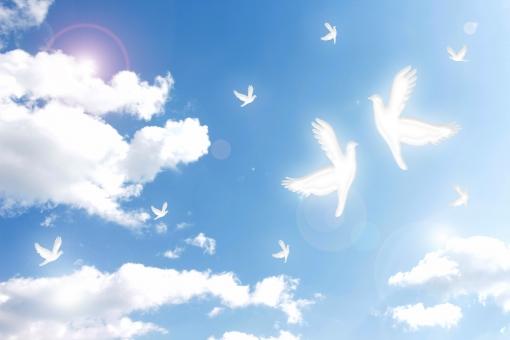 青空 空 鳩 ハト 白い鳩 白いハト 白い鳥 幸せ ハッピー HAPPY 幸福 飛び立つ 放つ 翼 つばさ 天 天空 雲 白い雲 青 白 bluesky ブルースカイ 動物 鳥類 風景 背景 画像加工 祝福
