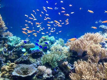 海 海底 水族館 魚 オーシャン サンゴ 青 水 ブルー 風景 生き物 魚介類 泳ぐ 自然界 イソギンチャク 生物 自然 水中 美しい 地球 岩礁 環境