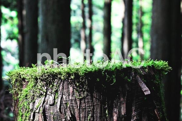 自然風景90の写真