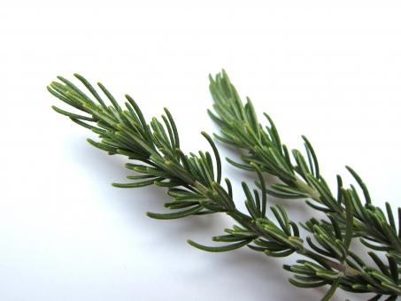 ハーブ ローズマリー 薬草 香り アロマ 美容 健康 料理 植物 アロマオイル 精油 エッセンシャルオイル 認知症 勉強 集中力 リフレッシュ