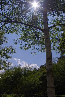 山奥 山 深緑 緑 グリーン 新鮮 空気 酸素 空 快晴 晴れ 晴天 曇り 白い雲 自然 環境 問題 エコ 青空 ブルースカイ 空 一本木 樹木 植物 芝 広場 木漏れ日 アングル 白樺 夏 春