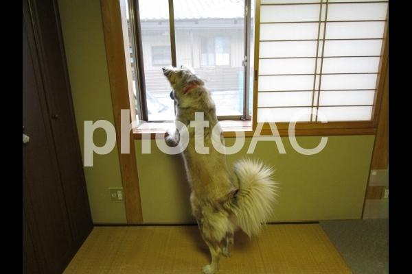 外を見る犬の写真