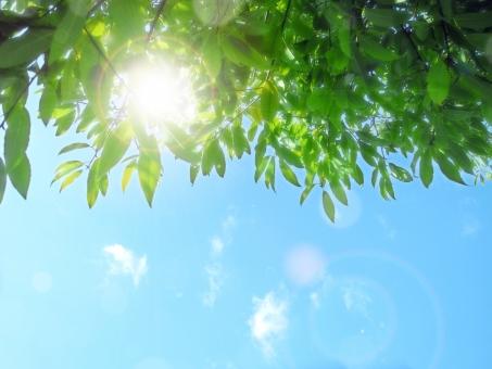 木漏れ日と空の写真