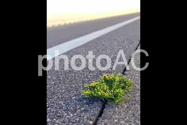 道路と植物の写真