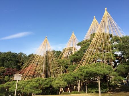 日本 北陸 金沢 Kanazawa 庭園 日本庭園 松 木 松の木 雪 雪つり 雪吊り 吊り 縄 空 青空 景色 風流 季節 伝統 行事 イベント
