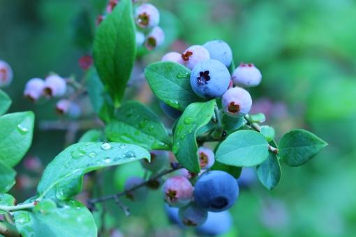 ãã«ã¼ããªã¼ ã¢ã³ãã·ã¢ãã³ blueberry ããªã¼ ãã«ã¼ããªã¼ç©ã ãã«ã¼ããªã¼æã¿ ç¼ã«è¯ã è¦å ãµããªã¡ã³ã ã¨ã¼ã°ã«ã ãã¿ãã³ æ°é®® æã¿ã㦠æé£ ãã«ã¼ã ã¹ãã¼ã¹ é¨ é¨ä¸ãã é¨ã®é« ãã©ãã© ãã«ã¼ããªã¼ã®æ¨ å® æå® èæ¯ èæ¯ç´æ ããã¹ãã¹ãã¼ã¹ ã³ãã¼ã¹ãã¼ã¹ ã³ãã¼ ã¢ãã ã¯ãã¼ãºã¢ãã æ¥å