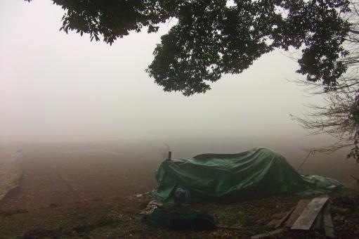 霧 靄 霞 朝もや 朝 早朝 天気 天候 weather 閑静 静寂 自然 緑 樹木 木 植物 風景 景色 穏やかな風景 穏やかな景色 fog monochrome モノクロ monotone モノトーン 五里霧中 朝の風景 朝の景色 自然現象