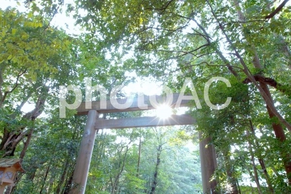伊勢神宮3の写真