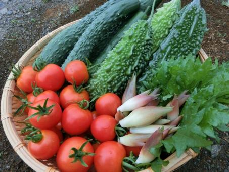 ザルに盛った夏野菜の写真