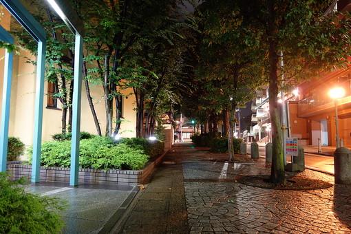 神戸 夜 夜景 街灯 ライト 木 緑 植物 建物 建築物 施設 石畳 観光 観光地 旅行 景観 道 歩道 道路 エントランス 街路樹