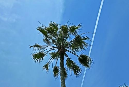 神奈川県 逗子市 マリーナ ヤシ 空 飛行機雲 南国 風景