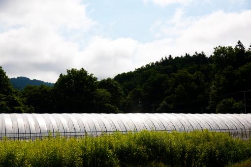 ビニールハウス ビニール 植物 食物 育てる 年中 温かい 暑い 保温 透明 農家 農業 北海道 空 大空 森 山 山中 草 自然 大自然 風景 景色 雄大 日本