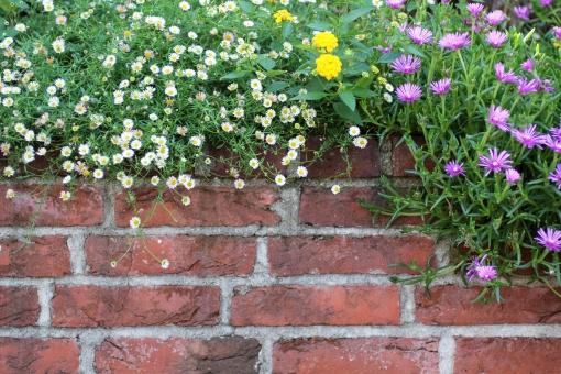 はな 花 小さな花 植物 緑 グリーン 春 初夏 夏 散歩 散歩道 ナチュラル 可愛い ガーデニング 花壇 花畑 背景 背景素材 テキストスペース コピースペース コピー アップ クローズアップ 接写 白 ピンク 黄色 黄 幻想的 ブロック 塀 煉瓦 レンガ 壁 フレーム