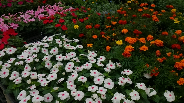 色々 沢山 たくさん いっぱい 花畑 お花畑 お花 花 カラフル 白 オレンジ ピンク 赤 黄色 色とりどり フラワー 緑 葉っぱ 葉 植物 背景