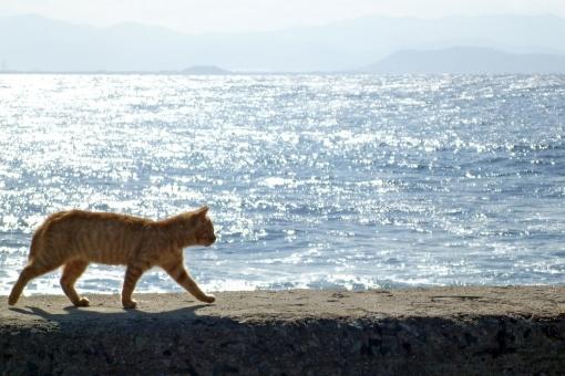 海 海辺 ネコ 猫 ねこ 野良猫 海岸 青 水色 青空 茶トラ 逆光 光 波 水面 きらめき 岸壁 防波堤 海面 seaside cat 水平線 動物 昼 晴れ 影 歩く 自然 風景