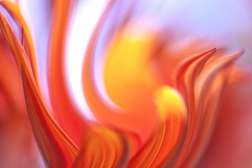 自然 植物 花 夏 初夏 夏の花 赤い花 炎の様に 真夏の花 炎イメージ 情熱的な花 情熱イメージ 夏の恋 ポストカード 待ち受け画像 バック素材 背景 テクスチャー コピースペース バックスペース 夏の思い出 光 光溢れる 光透過光 若さいっぱい 元気色の花 ビタミンカラー 灼熱の花 燃え上がる思い 夏休み 季節感 暑中見舞い 梅雨明けイメージ