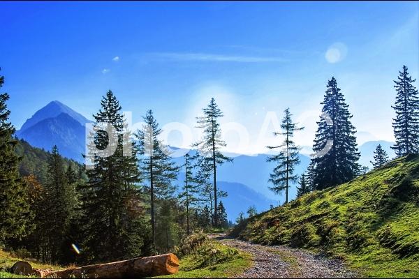 山8の写真