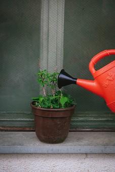 ガーデニング 園芸 栽培 花 草花 フラワー 植物 鉢植え 植木鉢 鉢 ポット 茶色 じょうろ 水やり 置く 遣る 注ぐ 育てる 水分 水 ガーデン 庭 庭園 庭先 窓 窓枠 網戸 庭仕事 庭いじり 作業 手入れ 世話 園芸用品 屋外 野外