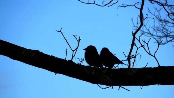 よりそう 寄り添う つれそう 連れ添う 新婚 ラブラブ カップル 熟年 家庭 2人 二人 仲良し 夫婦円満 鳥 リラックス のんびり ゆったり いつも一緒 愛 恋 恋愛 相談 秘密 ふたりっきり
