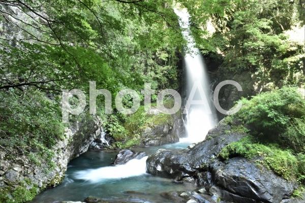 河津七滝の写真