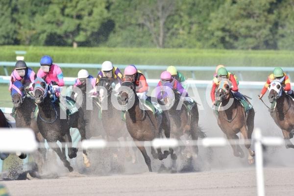 競馬の写真