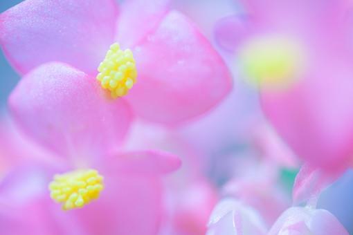 ピンク色の花4の写真
