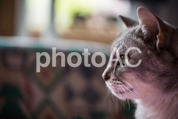 猫の眼差しの写真