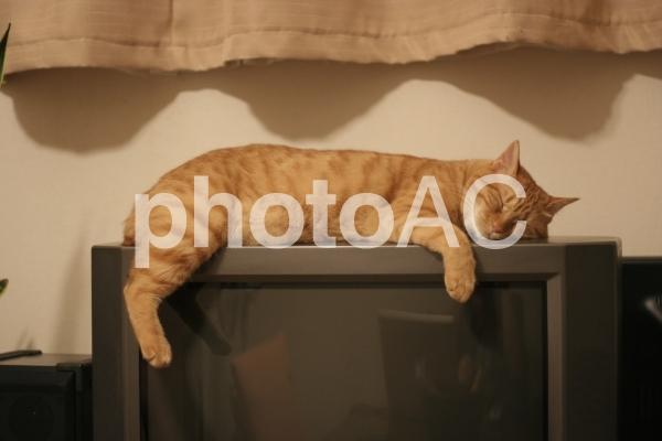 テレビの上で寝る猫の写真