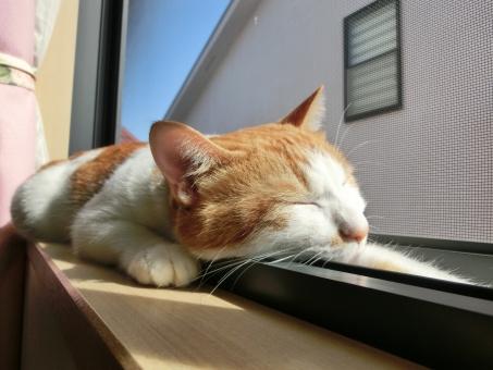 ネコ 猫 くつろぐ 寛ぐ リラックス 日差し 晴れ 窓辺 寝る 眠る 睡眠 怠ける だらける なまける 目を閉じた 伸びる 青空 家猫 飼い猫 室内猫 にゃらん ペット 動物
