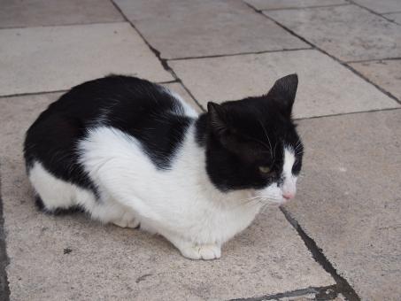 海外 外国 ドブロブニク 町並み 建物 海外旅行 野良猫 猫 ハチワレ 黒白 ねこ ネコ 可愛い かわいい カワイイ 観光地 海外の猫 動物 キレ気味 うずくまる 丸くなる 目つき 悪い にらむ 睨む 狙う