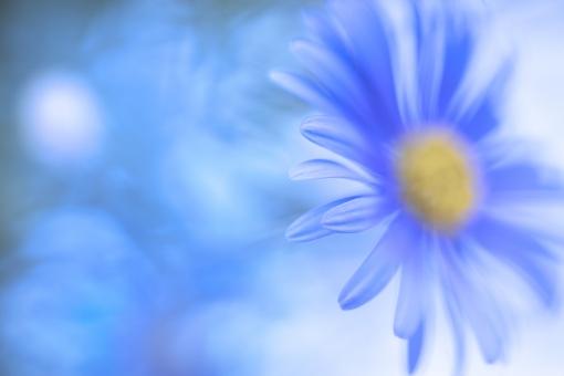 自然 植物 花 春の花 夏の花 初夏 マーガレット 新緑 若葉 新芽 四月・五月の花 六月の花 爽やかイメージ 背景 テクスチャー 季節感 暑中見舞い ポストカード コピースペース 待ち受け画像 バックスペース クールイメージ ブルーイメージ 森 林 公園 ガーデン 庭 花壇 清々しい 野外アウトドア 涼し気なイメージ みずみずしい 光を浴びて 光透過光