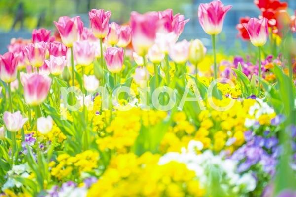 幻想的な花146の写真