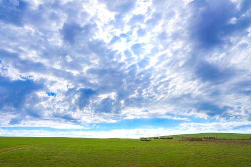 モンゴルの青空と大草原の写真