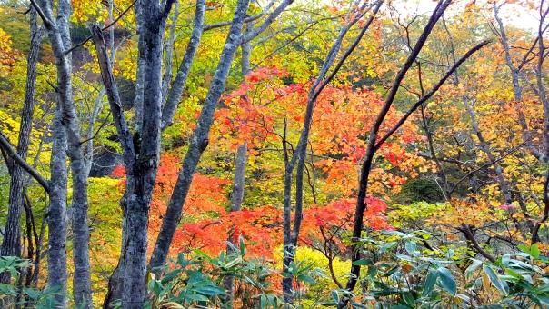 北海道の紅葉38の写真
