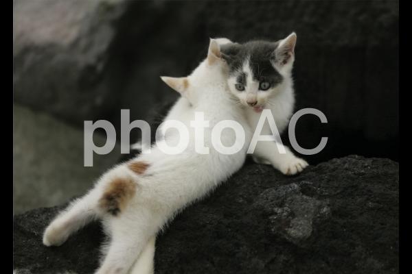 岩猫兄弟10の写真
