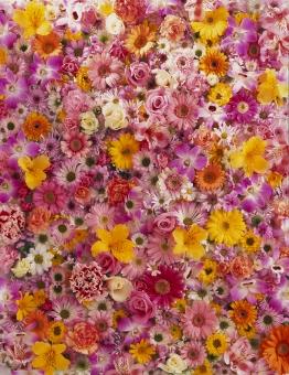 花のオンパレの写真