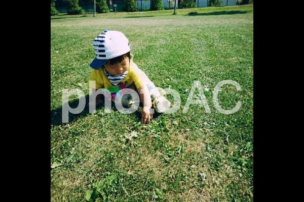 芝生を触る子供の写真