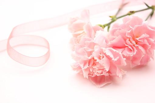花 カーネーション 母の日 ピンク バック コピースペース 淡い 年中行事 切り花 植物 かわいい イベント リボン