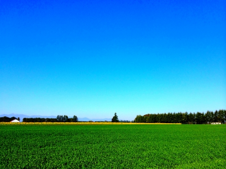 北海道 十勝平野 地平線 草原 農業 風景 景色 背景 晴天 快晴 お天気 雲一つない青空 快適 爽快 さわやか 爽やか 青 緑色 防風林 風 暑さ 暑い 涼しい 涼しげ 遠くの山並み 夏 秋